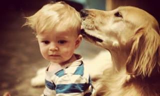 18 כלבים חמודים שיעשו הכל בשביל ילדים