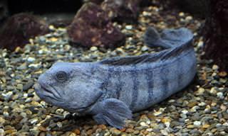 הכירו 11 יצורים מסתוריים שחיים במעמקי הים
