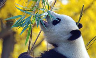 8 סרטונים טבע בעברית על חיות מדהימות שתרצו להכיר