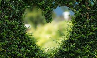"""""""הוורד"""" - שירה המקסים של בט מידלר על דבקות האמונה באהבה"""