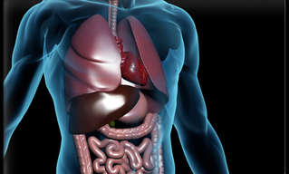 9 מיתוסים נפוצים ומוטעים על מערכת העיכול