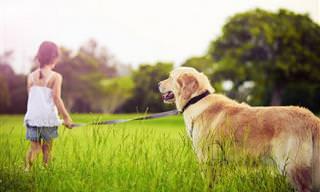 למה לכלבים יש חיים קצרים? סיפור מרגש עם מסר חשוב!