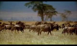 מסע מדהים בשמי אפריקה!