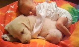 תמונות מקסימות של ילדים ישנים על כלבים