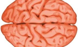 7 עקרונות אודות המוח שאם תבינו אותם, הם ישנו את חייכם!