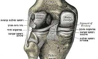 מה עושים כשכואב בחלק האחורי של הברך?