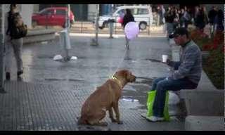 יוזמה מרגשת לכלבי רחוב