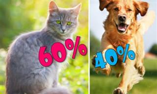 מה אתה יותר, כלב או חתול?