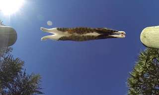 החתול הזה הוא פשוט ספורטאי אקסטרים - לראות ולא להאמין!