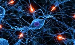 40 דברים שיכולים להרוג את תאי המוח שלכם!