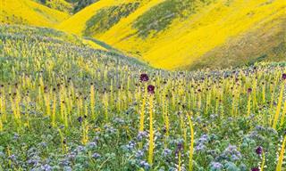 סדרת תמונות מרהיבות של זוג צלמים שהתאהבו בעולם הפריחה
