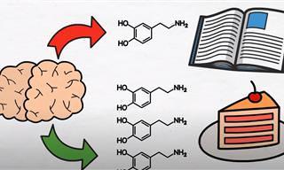 כיצד דופמאין משפיע לרעה על המוח ואיך ניתן להילחם בו?