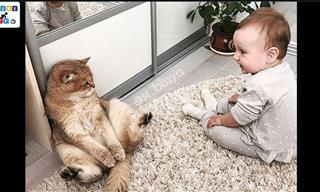 סיפורי חברות ואהבה מקסימים בין חתולים לילדים קטנים