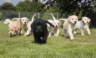 גורי כלבים חמודים ומקסימים