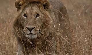 סיור בפארקים הלאומיים של אפריקה