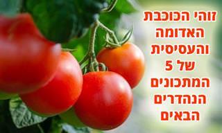 5 מתכונים למנות עיקריות ותוספות שבהן מככבת עגבנייה
