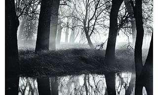 רומאן לורנק - צילומים מרהיבים!