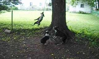 מעשה בשלושה כלבים וחבל - חמוד!