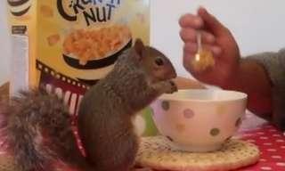 סנאי שלא אוכל כלום חוץ מקורנפלקס!