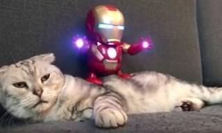 """מפגש מצחיק בין בובת """"איירון מן"""" לחתול שנמאס לו..."""