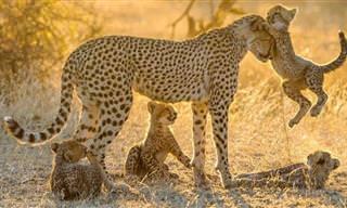 19 חיות שמוכיחות עד כמה חשובה האם לילדיה
