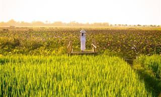 18 תמונות נוף ייחודיות של וייטנאם הקסומה