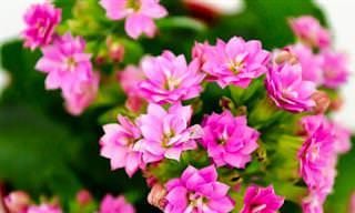 10 צמחים שתוכלו לגדל בקלות ובהצלחה בביתכם