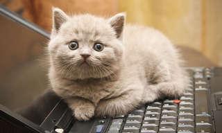 חתולים שמנסים להשתמש בטכנולוגיה ונכשלים