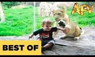 מפגשים מצחיקים בין חיות לילדים