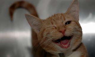 חיות מחייכות מאושר
