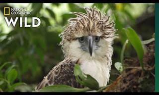 8 סרטוני חיות בר בסביבתן הטבעית