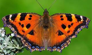 תמונות הפרפרים הנפלאות של אדם גור