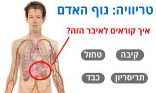 בחן את עצמך: עד כמה אתה באמת מכיר את הגוף שלך?