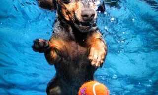 כלבים מתחת למים - מקסים!