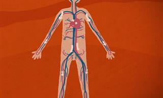 המסע המופלא של החמצן בגוף - סרטון הסבר מרתק ומעשיר