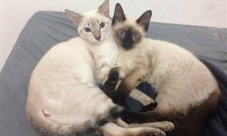 החתולים החמודים האלו רוצים להגיד לך משהו חשוב מאוד...