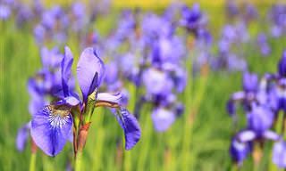 14 גיפים של פרחים בתנועה