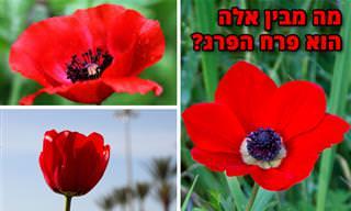 מבחן זיהוי פרחים