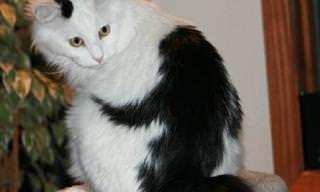 דבק בהם כתם: פרוות החתולים עם הצורות הכי מצחיקות