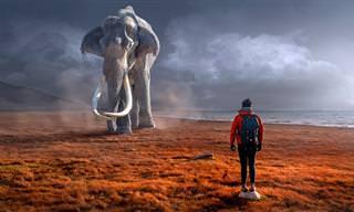 מה המשמעות של 12 בעלי חיים שונים בחלומות שלכם?