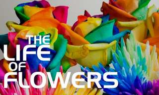 פרחים נפתחים לנגד עינינו