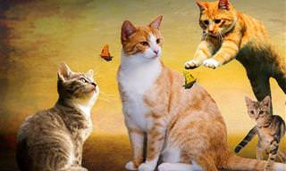 5 סוגי האישיות הנפוצים ביותר בקרב חתולים