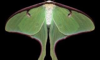 פרפרים בכל מיני צבעים - תמונות אקזוטיות
