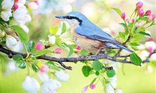 בחרו ציפור וגלו פרטים מפתיעים על אישיותכם