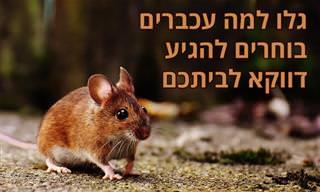 6 סיבות שבגללן עכברים מגיעים לביתכם