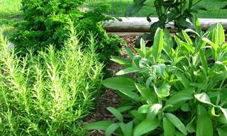 9 צמחים ותבלינים נפלאים שישפרו את התפקוד המוחי שלכם