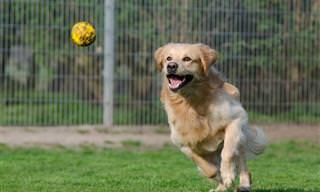 מה האופי של הכלב על פי הפעילות האהובה עליו
