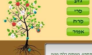 חידת הכרת חלקי העץ