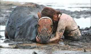 סיפור בתמונות: להציל סוסה מהבוץ!