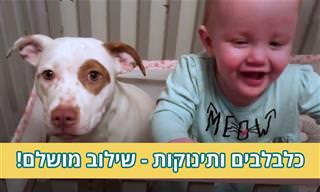 סרטון של תינוקות וכלבלבים חמודים